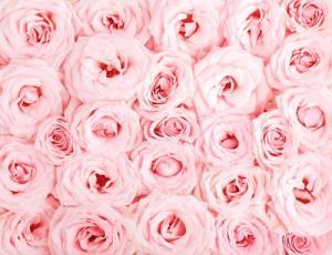 Vinylbakgrund 1.5x2.2m - Rosa rosor
