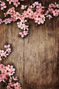 Vinylbakgrund 1.5x2.2m - Trävägg med rosa blommor